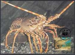 1655: Alderney - Maximumkarten