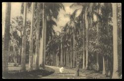 Ceylon - Picture Postcards